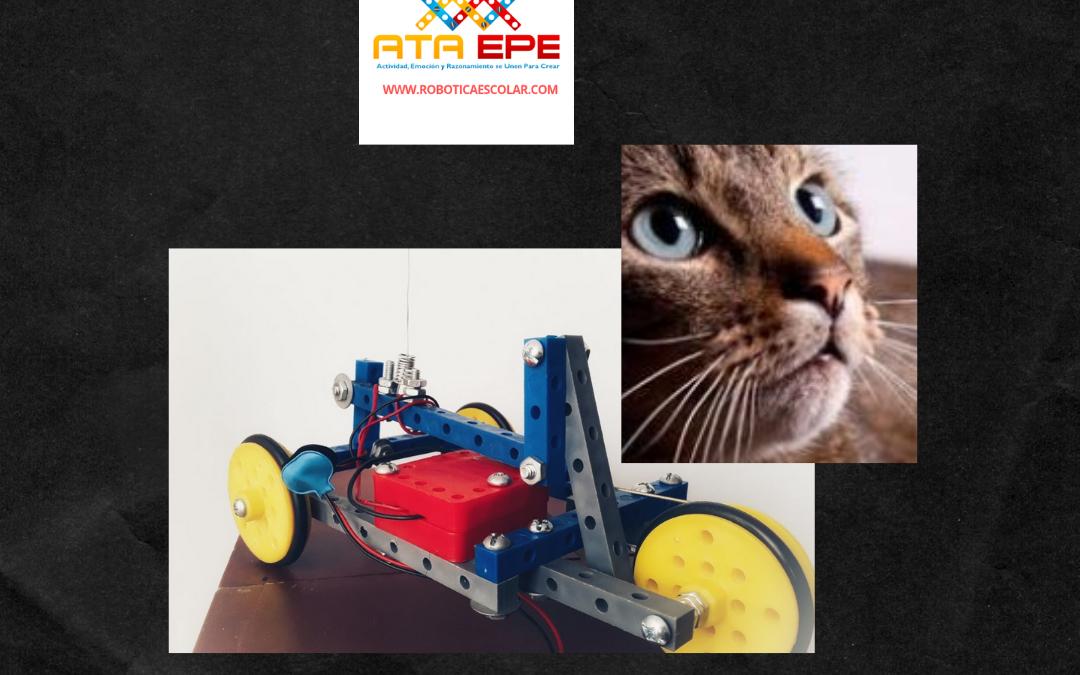 3 cosas que puedes aprender de los bigotes de los gatos con El Pelón de ATA EPE